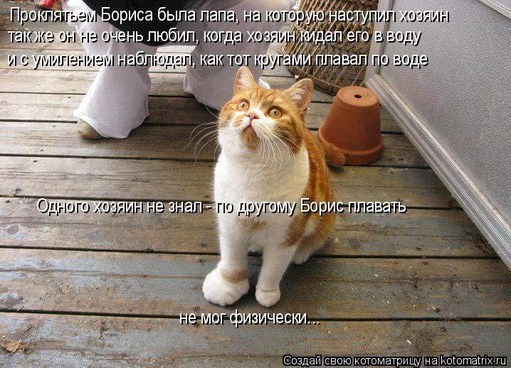 Котоматрица: Проклятьем Бориса была лапа, на которую наступил хозяин так же он не очень любил, когда хозяин кидал его в воду и с умилением наблюдал, как т