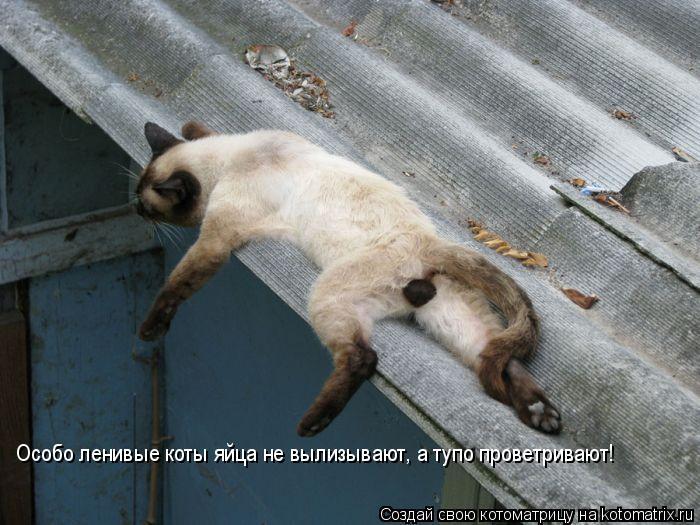 Котоматрица: Особо ленивые коты яйца не вылизывают, а тупо проветривают!