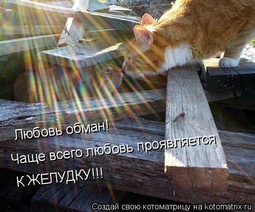 Котоматрица: Любовь обман!  Чаще всего любовь проявляется  К ЖЕЛУДКУ!!!