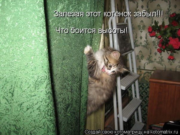 Котоматрица: Залезая этот котёнок забыл!!! Что боится высоты!