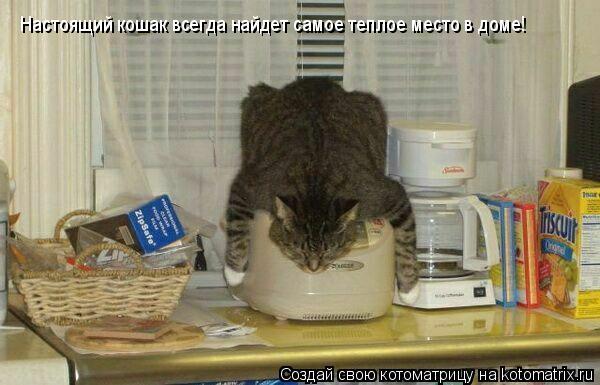 Котоматрица: Настоящий кошак всегда найдет самое теплое место в доме!