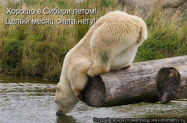 Котоматрица: Хорошо в Сибири летом! Целый месяц снега нету!