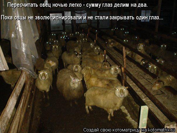 Котоматрица: Пересчитать овец ночью легко - сумму глаз делим на два. Пока овцы не эволюционировали и не стали закрывать один глаз...