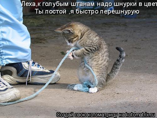 Котоматрица: Леха,к голубым штанам надо шнурки в цвет Ты постой ,я быстро перешнурую