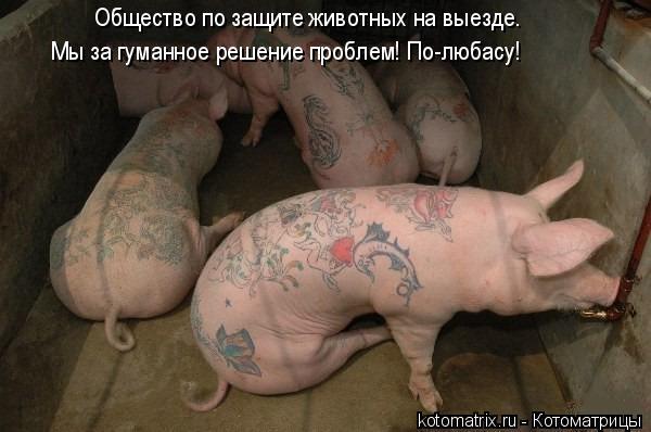 Котоматрица: Общество по защите животных на выезде. Мы за гуманное решение проблем! По-любасу!
