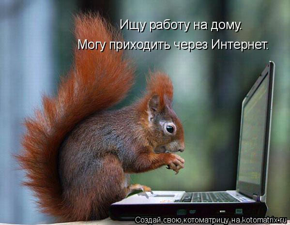 Котоматрица: Ищу работу на дому. Могу приходить через Интернет.