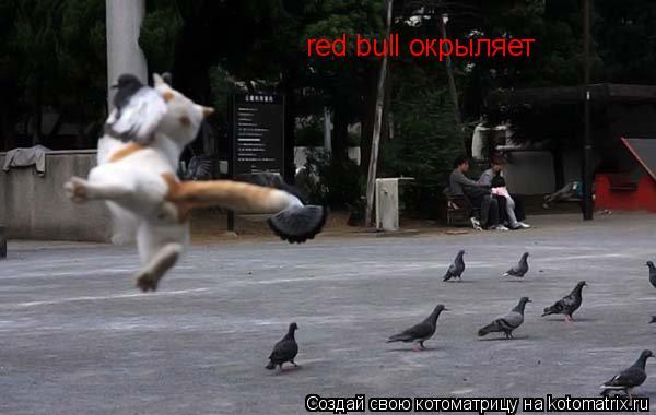 Котоматрица: red bull окрыляет