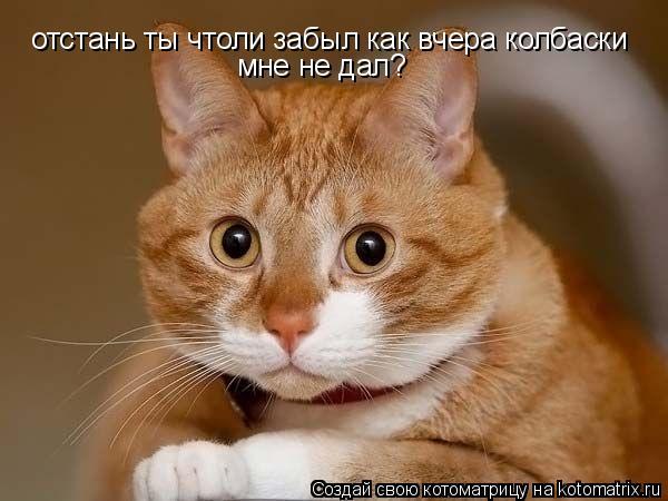 Котоматрица: отстань ты чтоли забыл как вчера колбаски мне не дал?