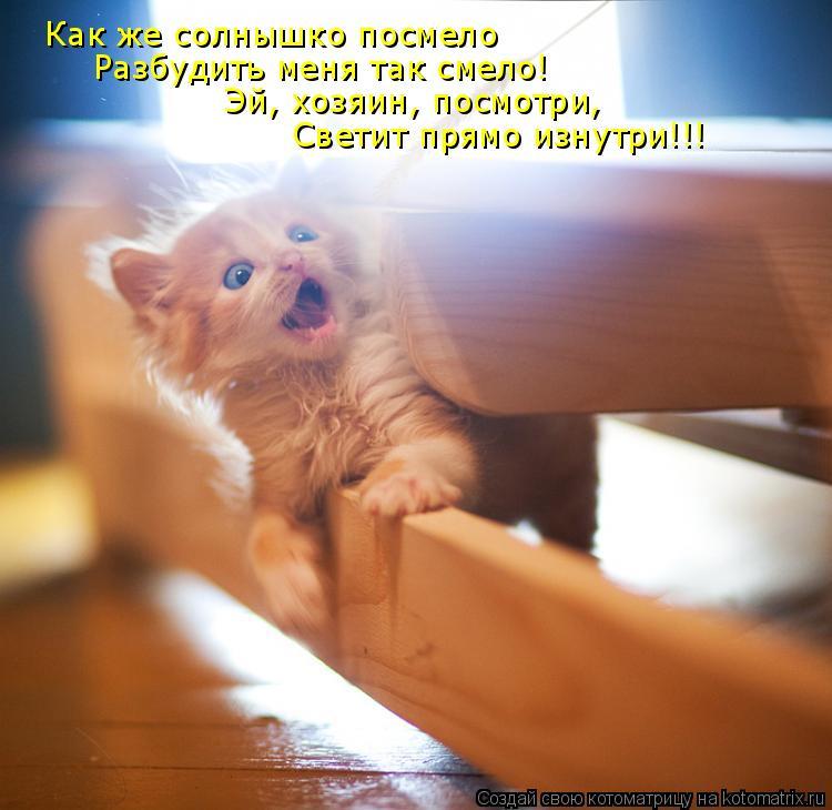 Котоматрица: Как же солнышко посмело Разбудить меня так смело! Эй, хозяин, посмотри, Светит прямо изнутри!!!