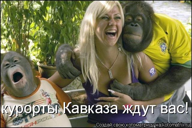 Котоматрица: курорты Кавказа ждут вас!