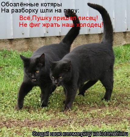 Котоматрица: Обозлённые котяры На разборку шли на пару: Всё,Пушку пришел писец! Не фиг жрать наш холодец!