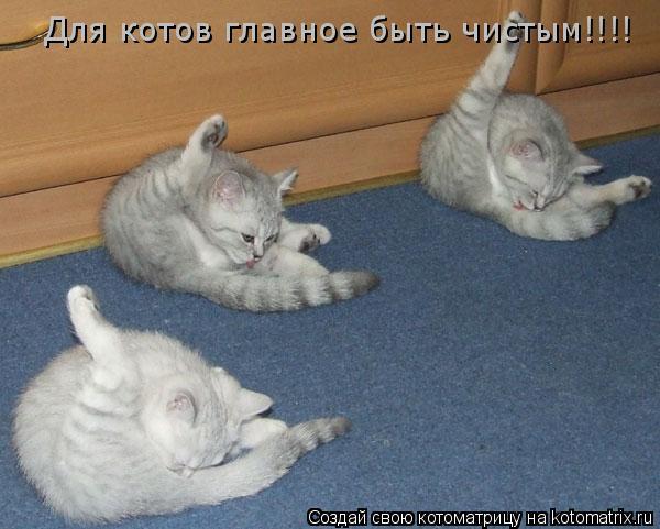 Котоматрица: Для котов главное быть чистым!!!!
