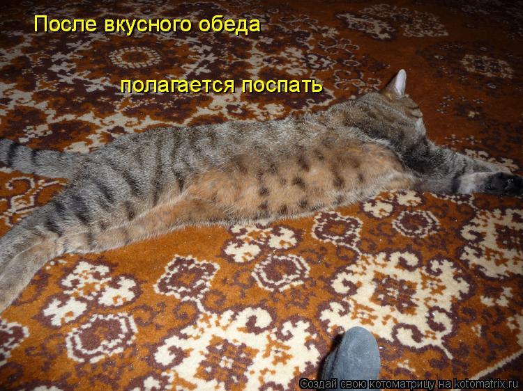 Котоматрица: После вкусного обеда После вкусного обеда После вкусного обеда  полагается поспать