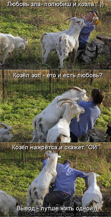 """Котоматрица: Любовь зла- полюбиш и козла...)) Козёл зол - ето и есть любовь? Козёл нажрётса и скажет """"ОЙ"""" Вывод - лутше жить одной))"""