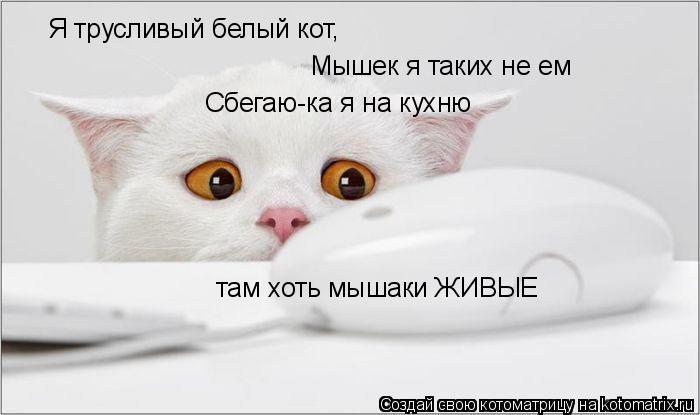 Котоматрица: Я трусливый белый кот, Мышек я таких не ем Сбегаю-ка я на кухню там хоть мышаки ЖИВЫЕ