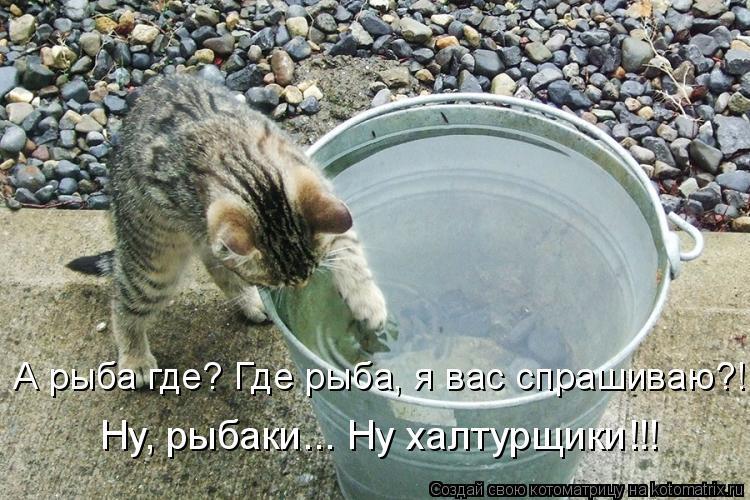 Котоматрица: А рыба где? Где рыба, я вас спрашиваю?! Ну, рыбаки... Ну халтурщики!!!