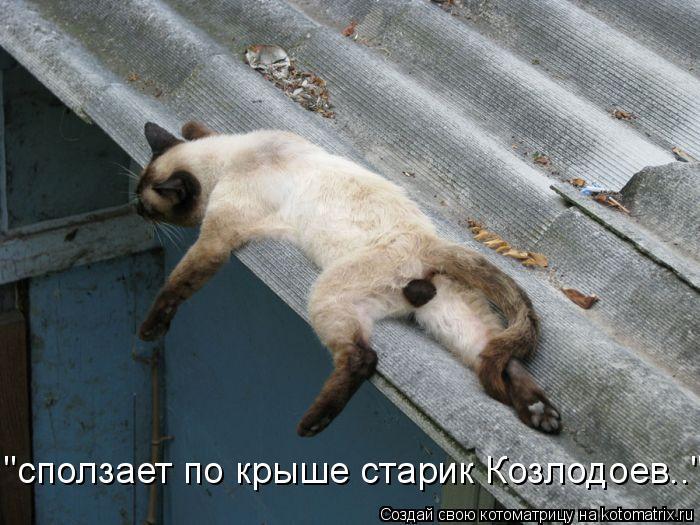 """Котоматрица: """"сползает по крыше старик Козлодоев.."""""""