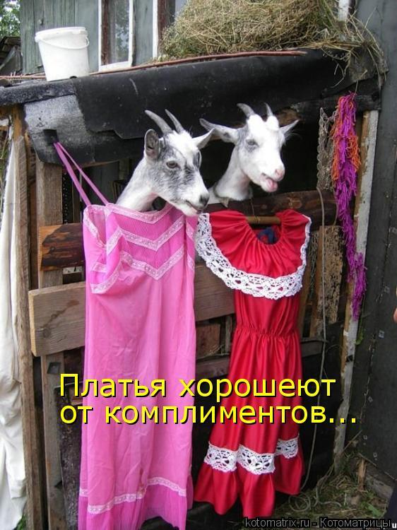 Котоматрица: Платья хорошеют  от комплиментов...