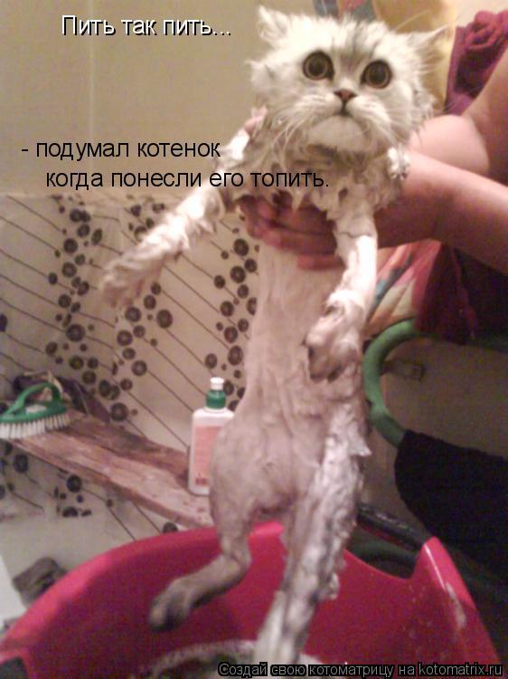 Котоматрица: Пить так пить...  - подумал котенок когда понесли его топить.
