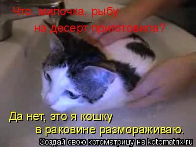 Котоматрица: Что, милочка, рыбу  на десерт приготовила? Да нет, это я кошку в раковине размораживаю.