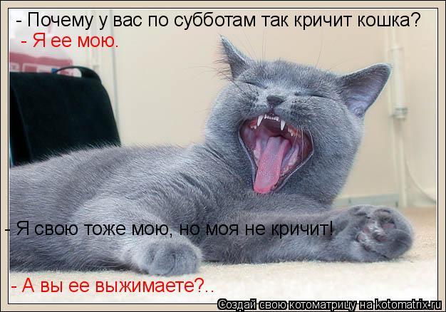 Котоматрица: - Почему у вас по субботам так кричит кошка? - Я ее мою. - Я свою тоже мою, но моя не кричит! - А вы ее выжимаете?..