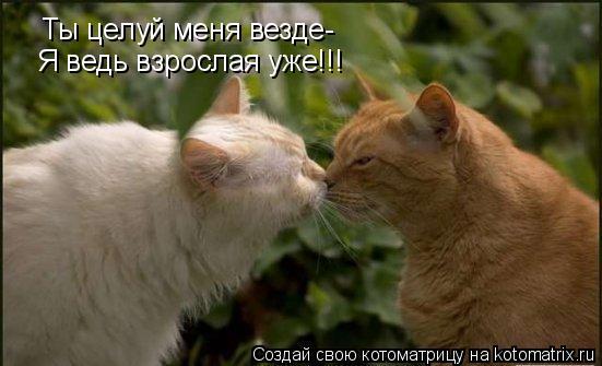 Котоматрица: Ты целуй меня везде- Я ведь взрослая уже!!!