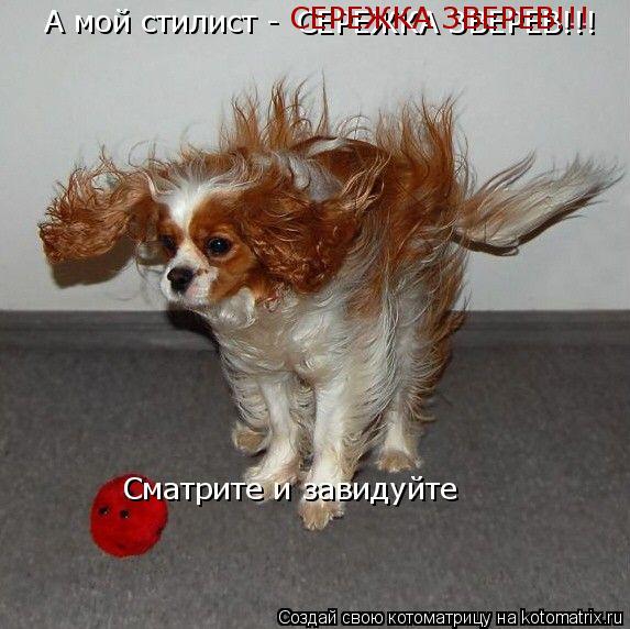Котоматрица: А мой стилист - СЕРЕЖКА ЗВЕРЕВ!!! СЕРЕЖКА ЗВЕРЕВ!!! Сматрите и завидуйте