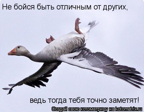 Котоматрица: Не бойся быть отличным от других, ведь тогда тебя точно заметят!