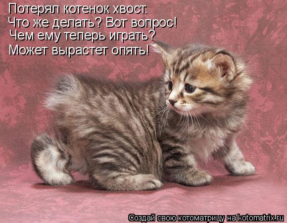 Котоматрица: Потерял котенок хвост.  Что же делать? Вот вопрос! Чем ему теперь играть? Может вырастет опять!