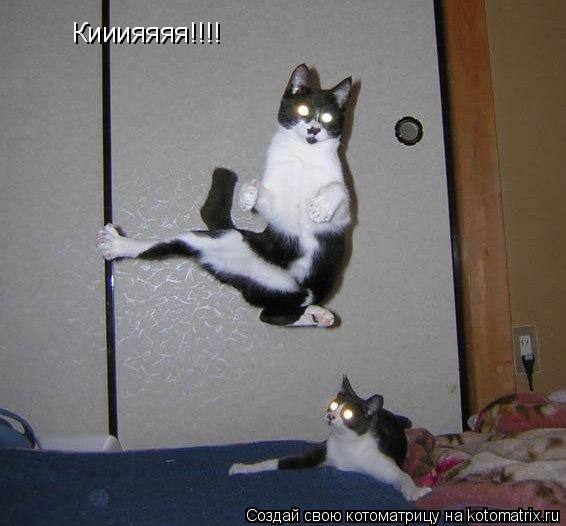 Котоматрица: Кииияяяя!!!!