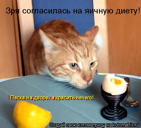Котоматрица: Зря согласилась на яичную диету! Пасха на дворе, а красить нечего! Пасха на дворе, а красить нечего!