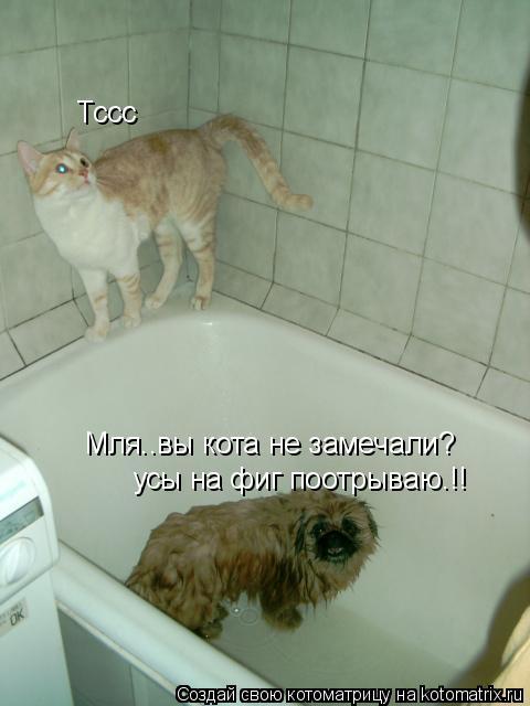 Котоматрица: Мля..вы кота не замечали? усы на фиг поотрываю.!! Тссс