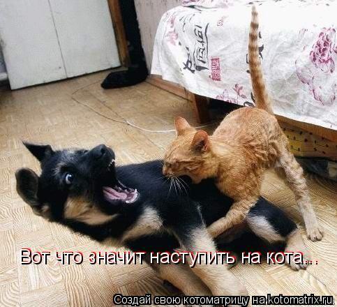 Котоматрица: Вот что значит наступить на кота... Вот что значит наступить на кота... Вот что значит наступить на кота...