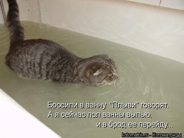 """Котоматрица: Бросили в ванну. """"Плыви"""" говорят. А я сейчас пол ванны выпью, и в брод ее перейду..."""