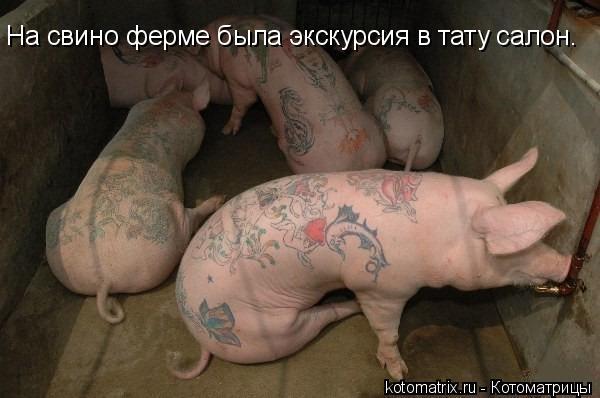 Котоматрица: На свино ферме была экскурсия в тату салон.
