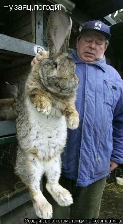 Котоматрица: Ну,заяц,погоди!