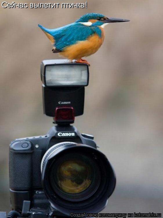 Котоматрица: Сейчас вылетит птичка!