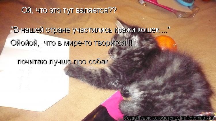 """Котоматрица: Ой, что это тут валяется?? """"В нашей стране участились кражи кошек...."""" Ойойой,  что в мире-то творится!!!! почитаю лучше про собак"""
