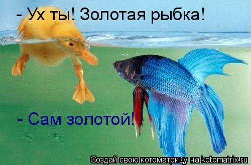 Котоматрица: Ух ты! Золотая Ры - Ух ты! Золотая рыбка! - Сам золотой!