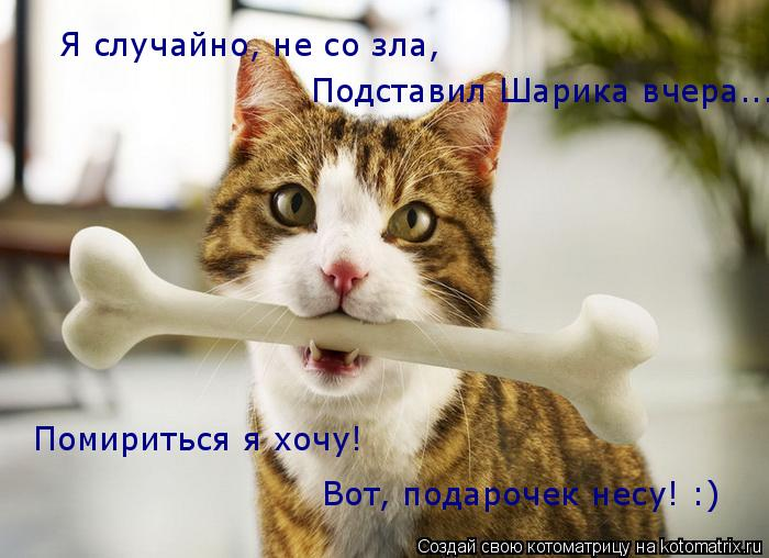 Котоматрица: Я случайно, не со зла, Подставил Шарика вчера... Помириться я хочу! Вот, подарочек несу! :)