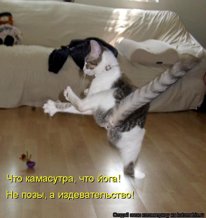 Котоматрица: Что камасутра, что йога!   Не позы, а издевательство!