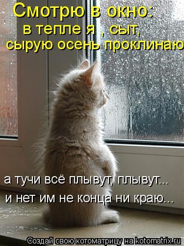 Котоматрица: Смотрю в окно:  в тепле я , сыт, сырую осень проклинаю а тучи всё плывут, плывут... и нет им не конца ни краю...