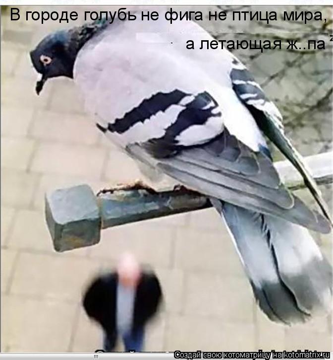 Котоматрица: В городе голубь не фига не птица мира, а летающая ж..па
