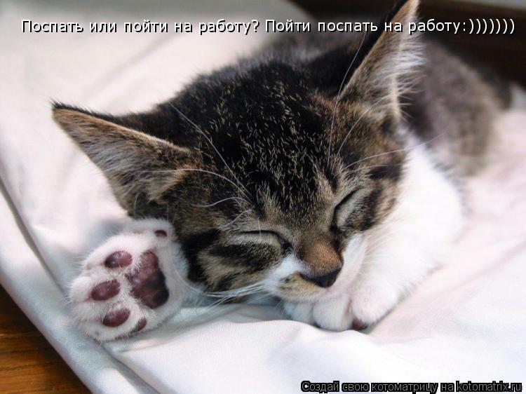 Котоматрица: Поспать или пойти на работу? Пойти поспать на работу:)))))))