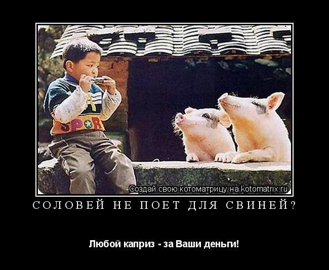 Котоматрица: Соловей не поёт для свиней? Любой каприз - за Ваши деньги!