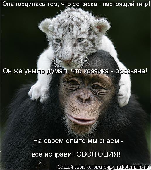 Котоматрица: Она гордилась тем, что ее киска - настоящий тигр! Он же уныло думал, что хозяйка - обезьяна! На своем опыте мы знаем -  все исправит ЭВОЛЮЦИЯ!