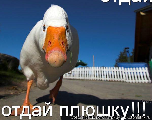 Котоматрица: отдай плюшку!!! отдай плюшку!!!
