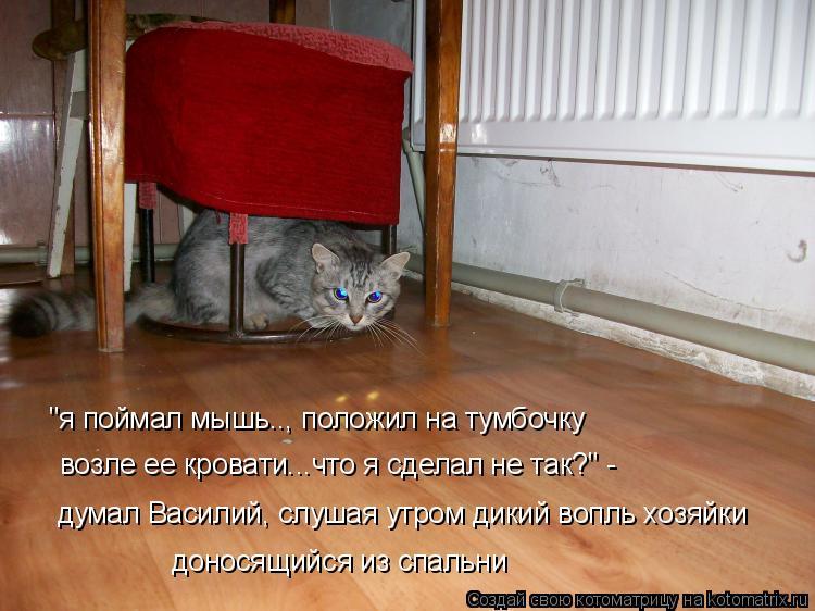 """Котоматрица: """"я поймал мышь.., положил на тумбочку  возле ее кровати...что я сделал не так?"""" - думал Василий, слушая утром дикий вопль хозяйки доносящийся из"""