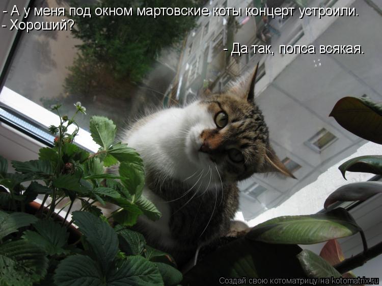 Котоматрица: - А у меня под окном мартовские коты концерт устроили. - Хороший? - Да так, попса всякая.