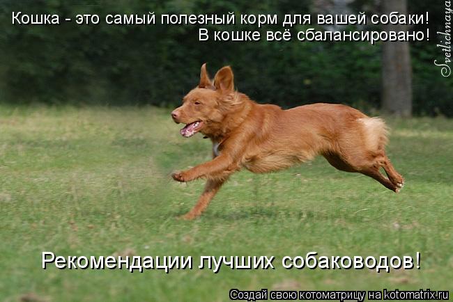 Котоматрица: Кошка - это самый полезный корм для вашей собаки! В кошке всё сбалансировано! Рекомендации лучших собаководов!